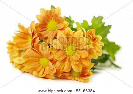 Orange Spray Chrysanthemum