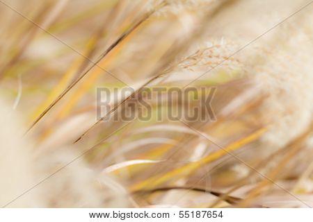 Grassy Autumn Bacckground
