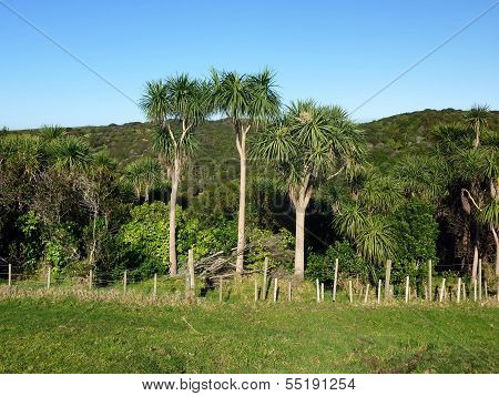 Landscape With Palm Trees, Bushes And Hills