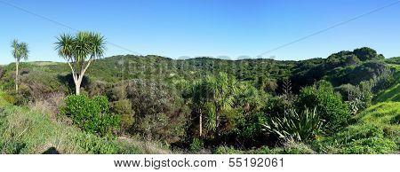 Panoramic Landscape With Palm Trees, Bushes And Hills