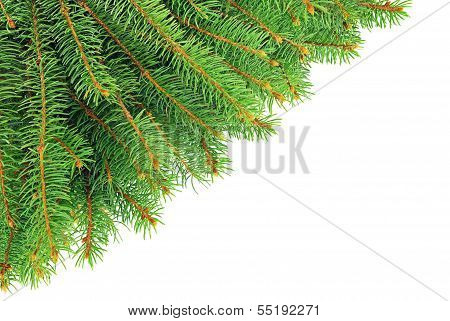 Christmas, Spruce Branches Isolated On White Background.