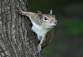 picture of cute animal face  - cute squirrel on tree  - JPG