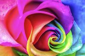 stock photo of macro  - Abstract Multicolor Rainbow Rose Close Up Macro - JPG
