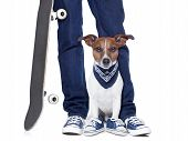 stock photo of skateboarding  - dog owner with dog both wearing sneakers and a skateboard - JPG