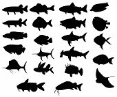 stock photo of bass fish  - Sets of silhouette Fishes 3 with both freah water and sea create by vector - JPG