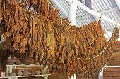 stock photo of tobacco barn  - The classic method of drying tobacco in the barn - JPG