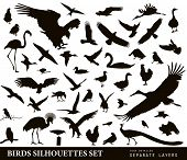 stock photo of duck-hunting  - Birds vector silhouettes set - JPG
