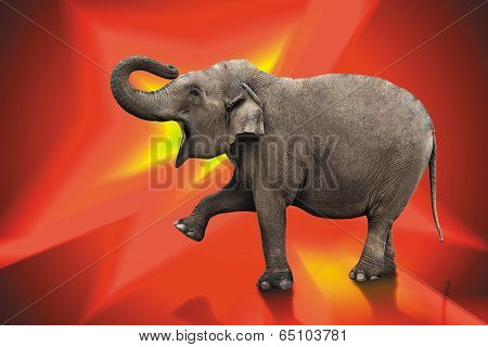 big elephant isolated with work path on red digital background