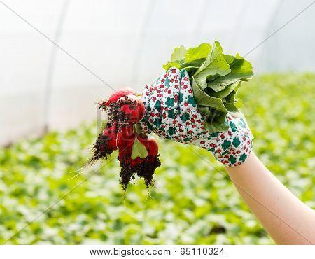 Today's Harvest