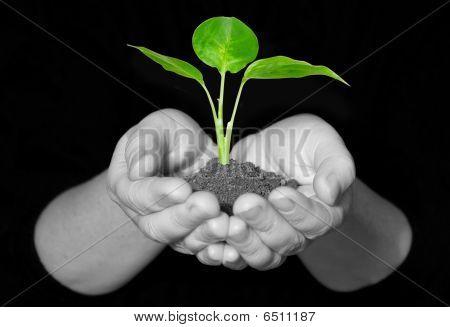 Plantn Hands