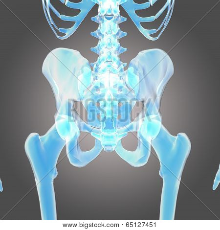 hip skeleton
