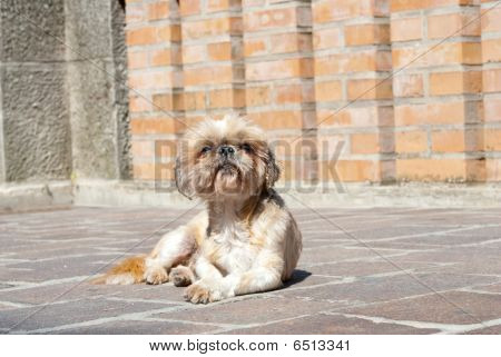 Dog In San Marino