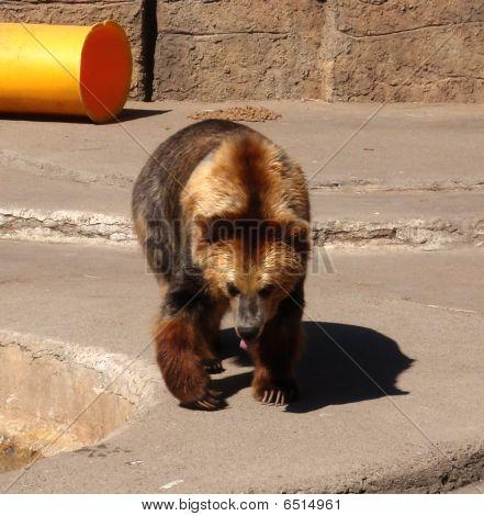Zoo oso