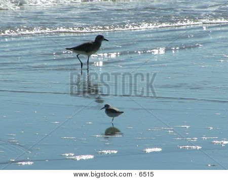 2 Vögel am Strand