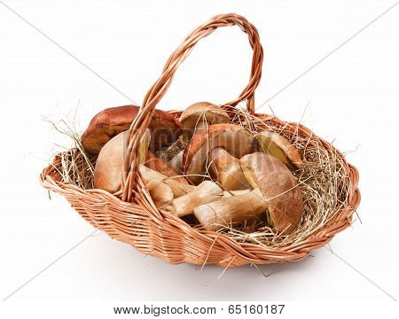Natural mushrooms in basket
