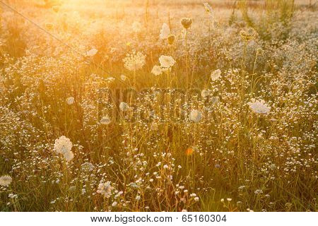 Summer wildflower meadow