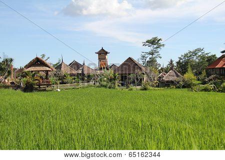 Balinese Rural Scene