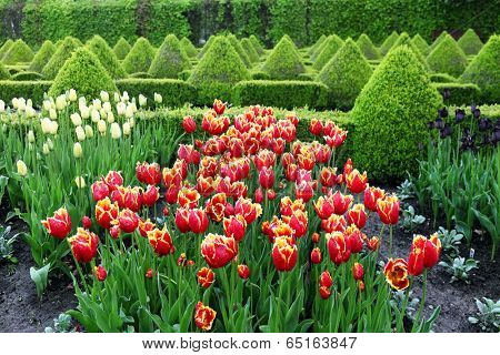 flowerbeds with tulips in spring