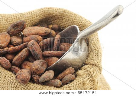 cocoa beans in a burlap bag with an aluminum spoon on a white background
