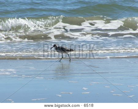Vogel am Strand