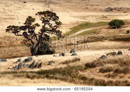 Australian Grassland Landscape