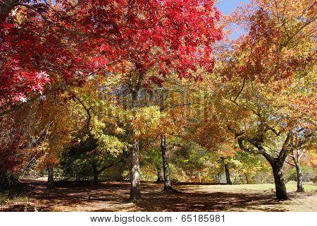 Autumn Landscape4
