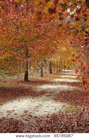 Autumn Pathway2