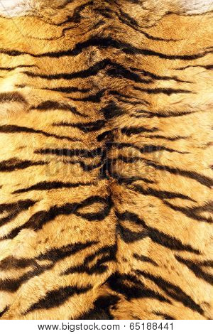Stripes On Tiger Pelt