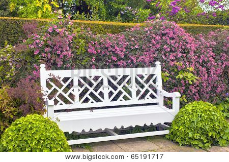 White garden bench with topiary shrubs and pink clematis.