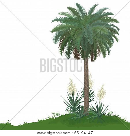 Palm tree and plants Yucca