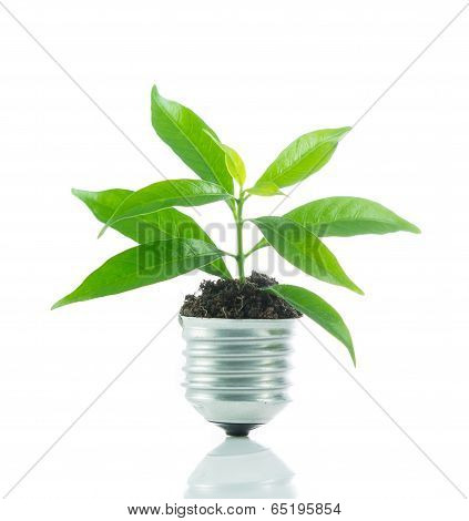 Green Plant New Life On Lamp Out Of A Bulb, Green Energy Concept