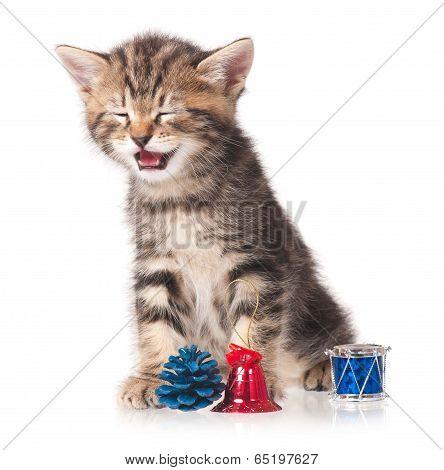 Offended Kitten