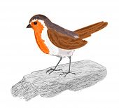 foto of robin bird  - Robin bird on the stone vector illustration without gradients - JPG