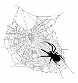 picture of crawling  - spider on the web  - JPG