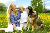 picture of puppies mother dog  - a happy young mother and her little child are sitting outside in a Dandelion Flower meadow laughing as the play with their pet German Shepherd Dog - JPG