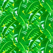 pic of banana tree  - Vector seamless pattern with big leafs inspired by tropical nature and plants like banana palm trees and ferns in multiple green colors - JPG