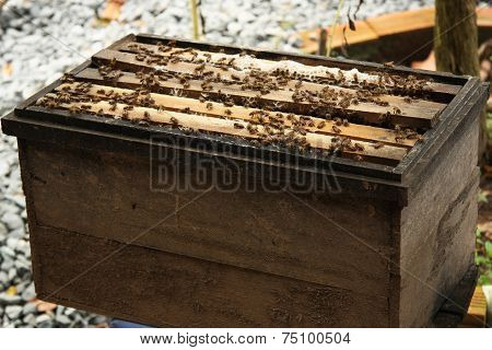 Natural wood bee box