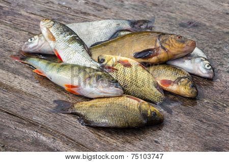 Raw Freshwater Fish On The Old Wooden Board