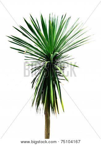The Isolate Tree