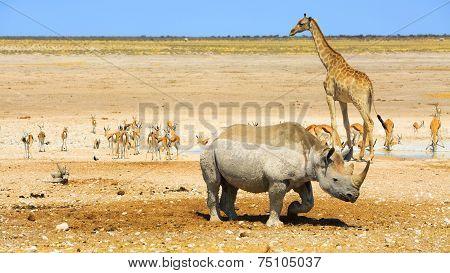 Animals around an Etosha waterhole