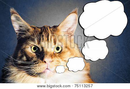 Maine Coon Orange Cat Portrait With Comic Baloon