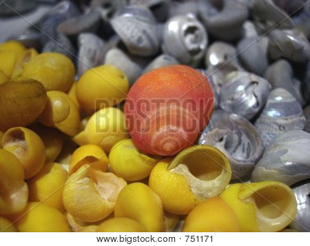 yellow,red and silver shells