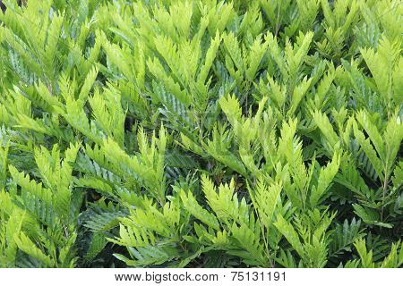 Similar green leaves for background