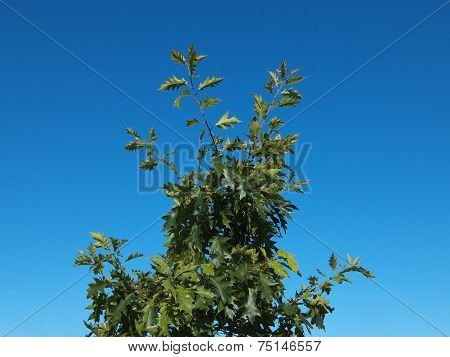 Green tree on blue sky background