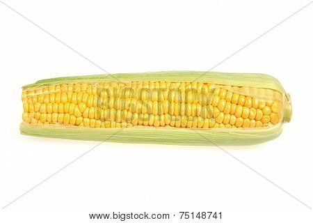Mature Maize Ear