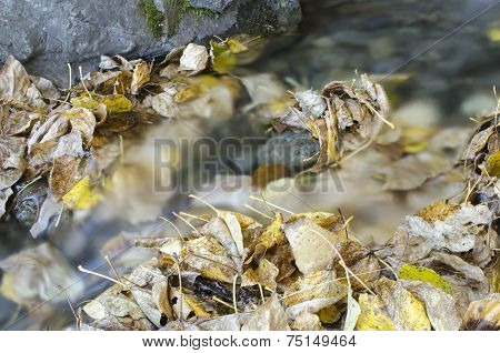 Autumn Leaves In Creek