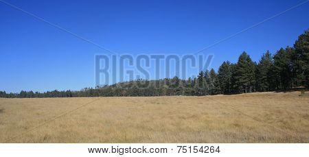 Big Laguna Meadow