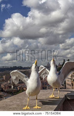 Seagulls In Rome