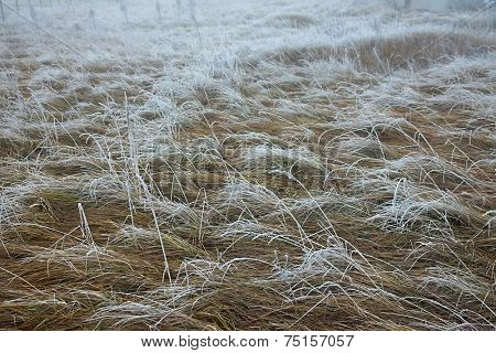 Winter field detail with frost