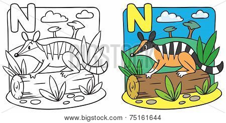 Little numbat coloring book. Alphabet N